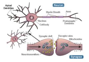 newotransmete-rezo-siyal-nan-sistem-ne-yo